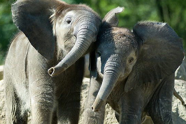 cute-elephants-10