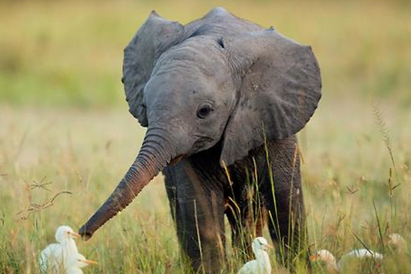 cute-elephants-2