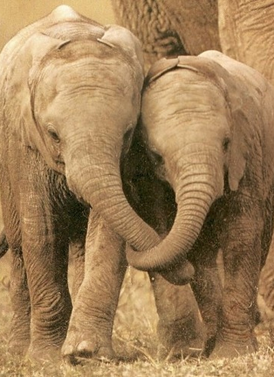 cute-elephants-4