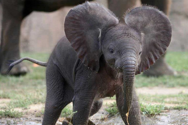 cute-elephants-7