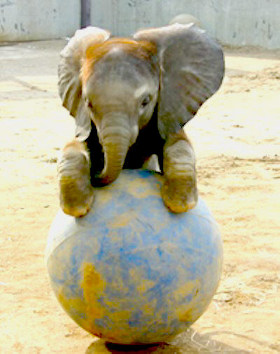 Funny-Baby-Elephants_1